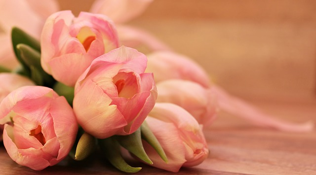 tulipány.jpg